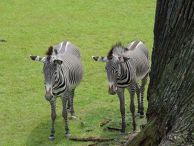 2004-06-04_01438_Zoo Leipzig