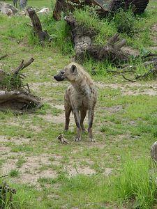 2004-06-04_01458_Zoo Leipzig