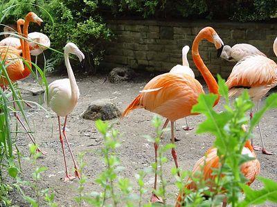 2004-06-04_01487_Zoo Leipzig