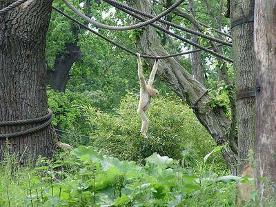 2004-06-04_01424_Zoo Leipzig