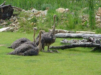 2004-06-04_01436_Zoo Leipzig