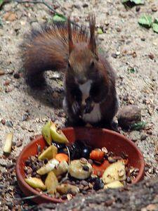 2004-06-04_01411_Zoo Leipzig