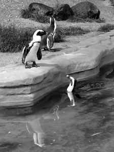 2004-06-04_01400_Zoo Leipzig