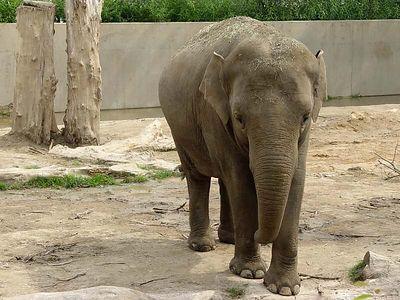 2004-06-04_01405_Zoo Leipzig