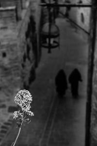 110 •Nuns of Assisi