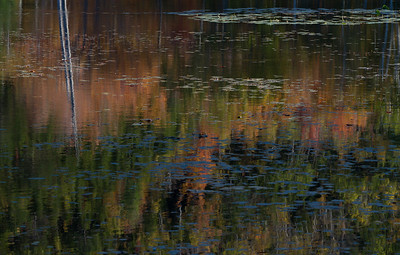 108 • Water Lilies