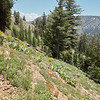 Last year, when I got north of Sonora Pass, the flowers were really spectacular.  This year, not so much.