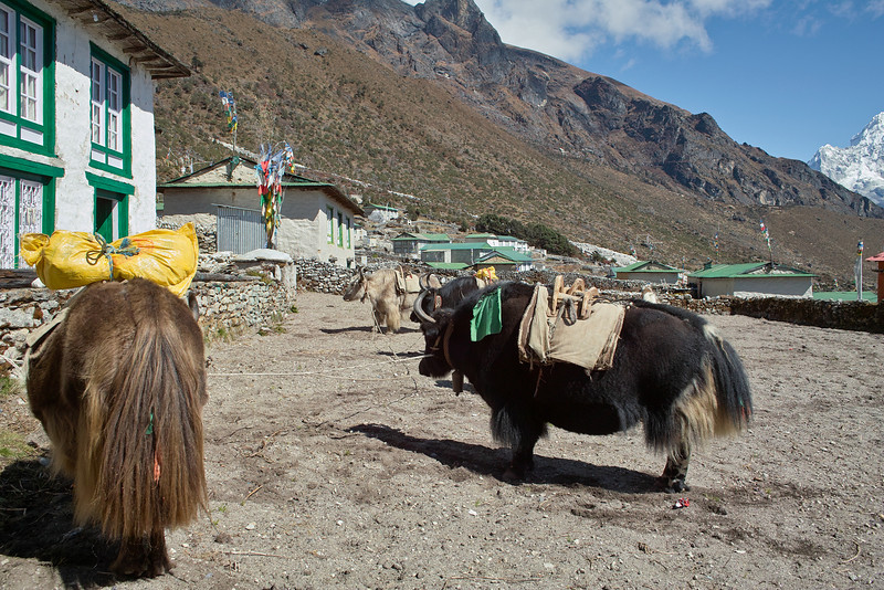 Real yaks are hairy, like this (so I read).