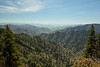 Great Smokey Mountain National Park - some rare time in an evergreen environment during the early going.