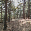 After several days in the desert, a chance to climb up into a forested environment.