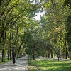 Bishkek - a shaded boulevard.