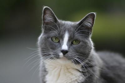 Comet, the borrowlenses cat
