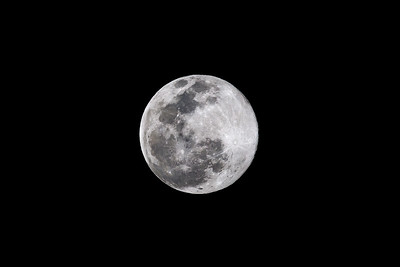 Taken with the RF 100-500mm F/4.5-7.1 L IS  and enlarged with Gigapixel AI