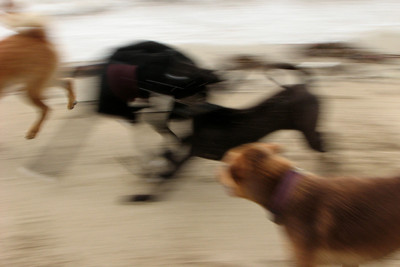 Abstract: Dogs, sand and speed.
