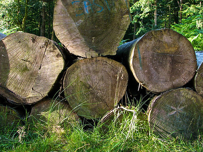 New Forest Logs