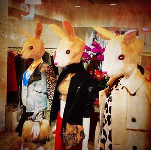 Bunny Fashion