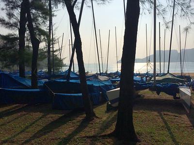 Boats Trees