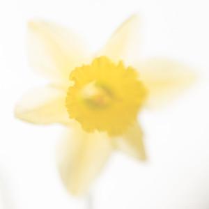 Narcis__DSC9479c_JD_KEL0418LE