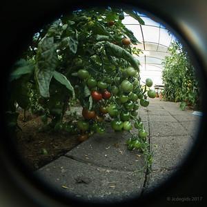 Serre_tomaten_LB_Fisheye_F11_0598c_JD_CHK0717ZO