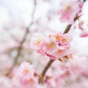 Japanse_tuin_Sol22_JC07747c_JD_HAL0319LE