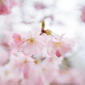 Japanse_tuin_Sol22_JC07742c_JD_HAL0319LE
