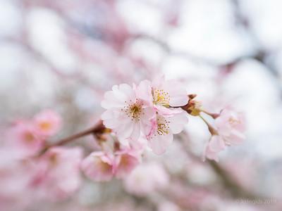 Japanse_tuin_Sol22_JC07743c_JD_HAL0319LE
