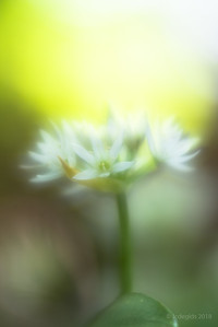 Lensbaby_Workshop_LB_Velvet56_8261c_JD_GBO0418LE