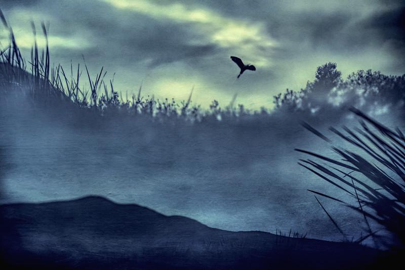 Egret Rising