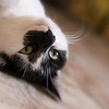 Sybil (taken with my new Lensbaby lens)