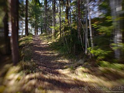 Skogssti Path