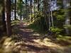 Skogssti<br /> Path