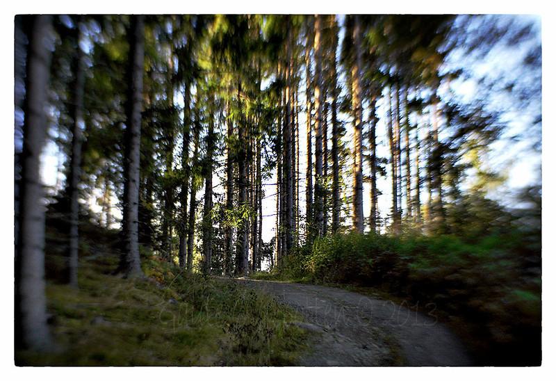 Horgenmoen (Wood Scene)