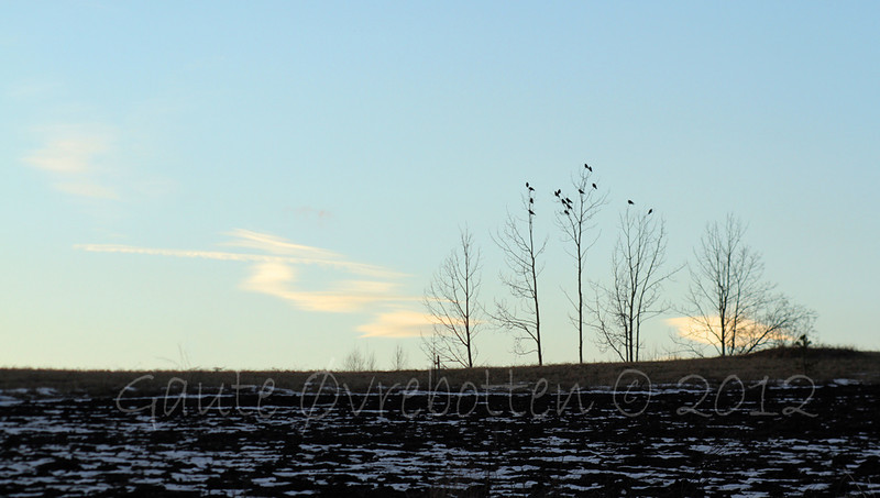 """""""Kveldssete"""" (The crows gathered at sunset)"""