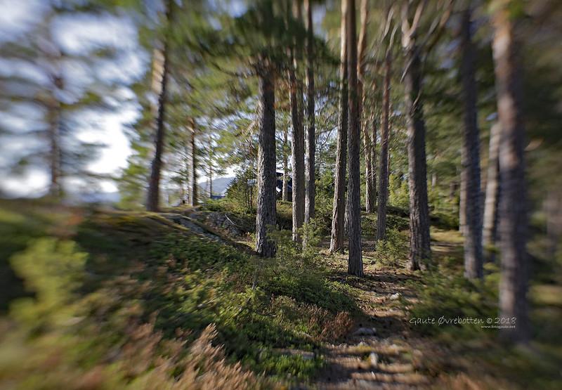 Stien / The path