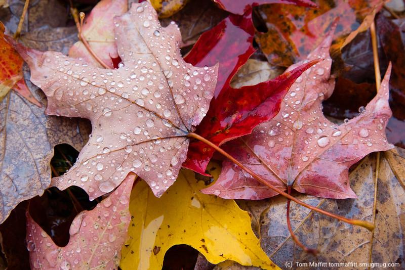 Fall Journey