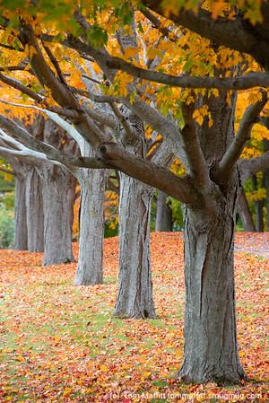 """Autumn Row"""