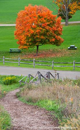 """""""Bridge to Autumn"""""""