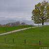 """Misty Morning,"" Shelburne Farms"