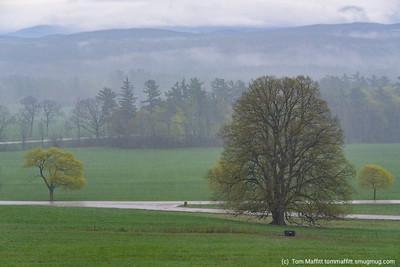 """Spring Mist"""