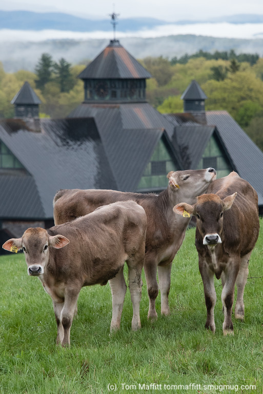 """Farm Friends,"" Shelburne Farms"