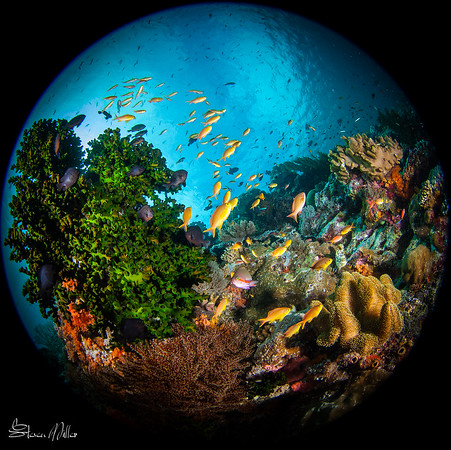 Fisheye lenses and tiny fish