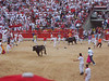 The bulls coming into the bull ring at 8 am on the first day of the running.<br /> - Linda