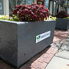 The Leominster Rotary Club helped make the downtown look great by putting flowers and plants in 45 of the boxes around Monument Square. They have been doing this for over 50 years. SENTINEL & ENTERPRISE/JOHN LOVE