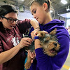 A vaccinations and microchipping for your pet was held at the Leominster Emergency Management building on Saturday, September 29, 2018. Veterinary Technicians Liz Amato, r, and Arelle Lacaire give Rolly a silky terrier from Fitchburg his microchip. SENTINEL & ENTERPRISE/JOHN LOVE