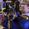 A vaccinations and microchipping for your pet was held at the Leominster Emergency Management building on Saturday, September 29, 2018. Pebbles, 8 months old, a miniature pinscher waits in line with his owner Megan Boivin, 17, from Gardner for his microchip. SENTINEL & ENTERPRISE/JOHN LOVE