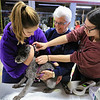 A vaccinations and microchipping for your pet was held at the Leominster Emergency Management building on Saturday, September 29, 2018. Veterinary Technicians Liz Amato and Arelle Lacaire give schnauzer poodle mix Toby, 9, from Leominster his microchip. With her is hisowner Emilda Sauvageau, center. SENTINEL & ENTERPRISE/JOHN LOVE