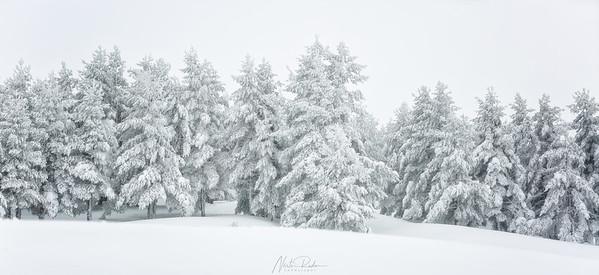Bosques de Lillo