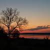 Dawn and Sycamore tree, Breton Bay, Leonardtown, MD, April 26, 2009.