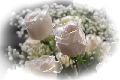 Close up view of white roses in a bed of baby's breath flowers, with light background.