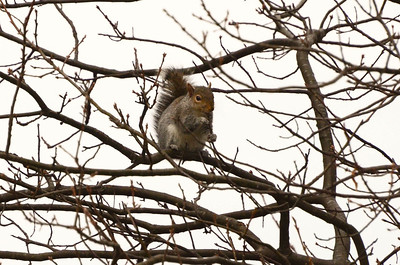 Squirrels live in trees too, ya know.